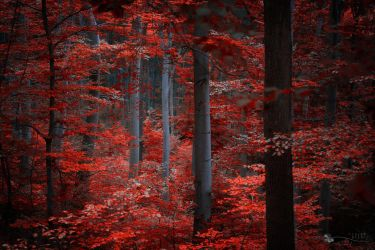 Secret Life by ildiko-neer