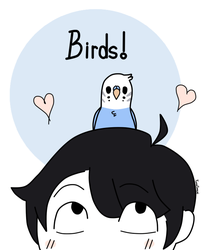 BIRDS! by YumeKilian