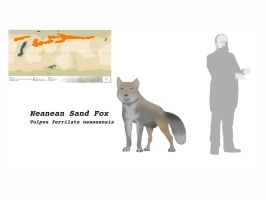 Neanean Sand Fox by Midiaou