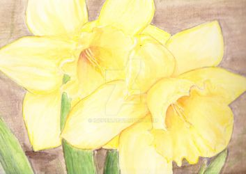daffodils by Inepien