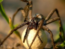 In Moms strong grip... by TheFunnySpider