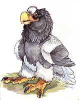Steller's Sea Eagle by caramitten