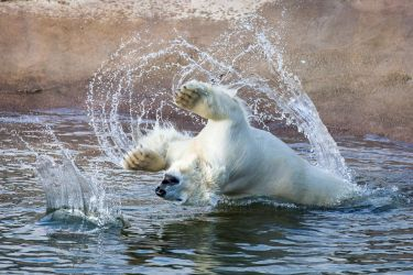 The polar bear cub3 by markotapio