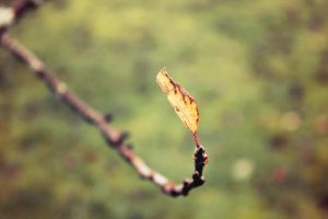 the last tree leaf by Astrazzz