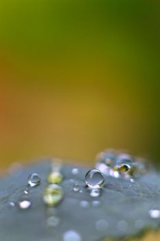 Waterdrops on a leaf no. 1 by luka567