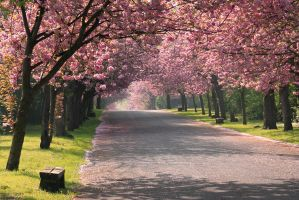 Pink Spring by NoahSud