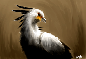 Secretary bird by Faezza