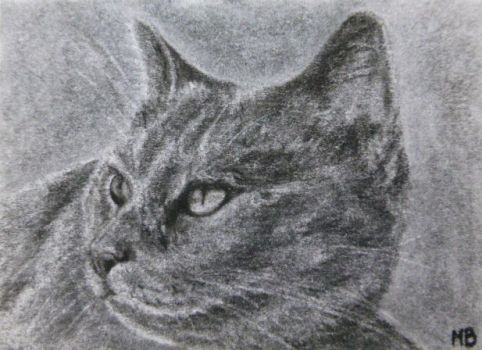 Charcoal Cats for the Cat Shelter No.1-ACEO by Actlikenaturedoes