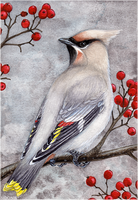 Bohemian Waxwing Card by Sidonie