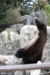 Sea Lion Tricks by WeirdFishPhotography
