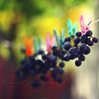 grapes by Orwald