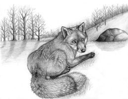 Fox by silvavocat