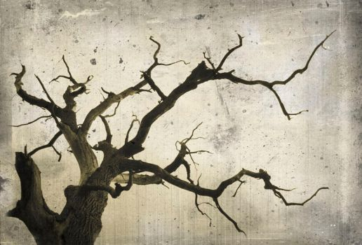 Tree_In_Old_Style by Theressa