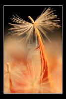 Macro firework by Haati-and-Mousa