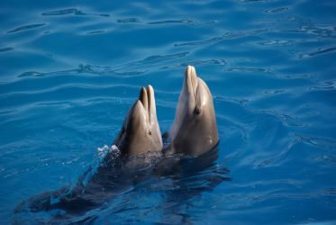 dolphins Dance by Melhia