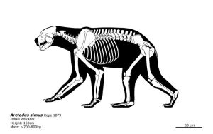 Arctodus simus: The short-faced bear. by bLAZZE92