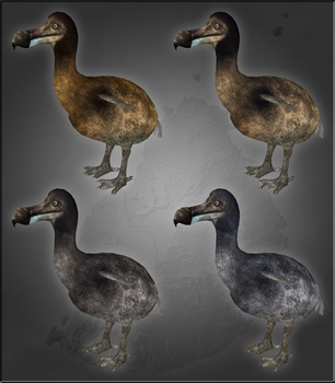 Dodo variation by MrGorsh