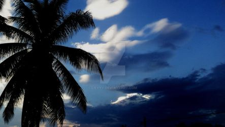 the coconut tree by lieyyy