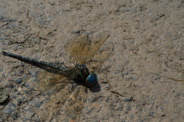 To hot for the Dragon Fly's by spacecityphototeam