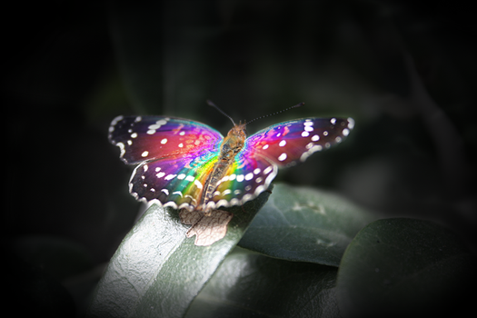 Butterfly by 4pps