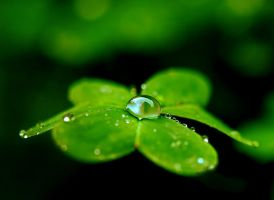 Fragile drop by Nataly1st