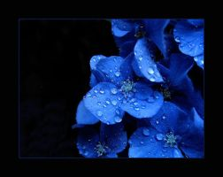 Blue on black by abstractlvr