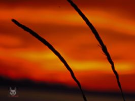 The Wheat Sunset by wolfwings1