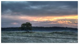 Morning impressions 2 in HDR by Volkmaritsch