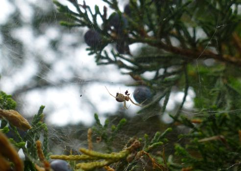 Untitled (Spider #1) by jeuxsansfrontieres