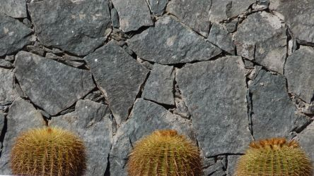 wall cactii by jonvin