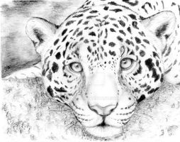 Leopard by COla013