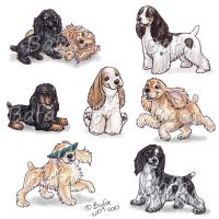 American Cocker Spaniels by Bafa