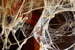 Spider web 3 by Fire-Fuel