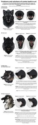 Fixing canine teeth and common anatomy errors by KFCemployee