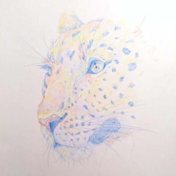 Multicolor Leopard by ClaireJouy