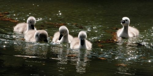 Five Go For A Paddle by Earth-Hart