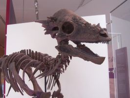 Pachycephalosaurus by BevisMusson
