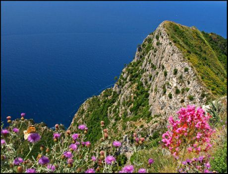 Capri View with Butterflies by AgiVega