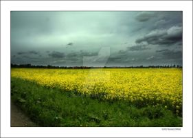 Raps fields by grugster
