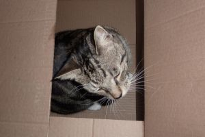Cat In The Box by Jetta-Windstar
