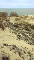 Curonian Spit :October: 10 by J-dono