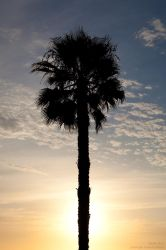 The Palm Before the Storm by CaptainNuss