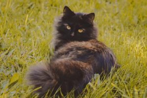 Cat-5281 by Christina-Phillips