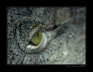 Crocodiles's eye by grugster