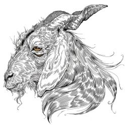 Goat by Carliihde