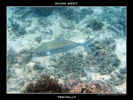 Guam 2 - Trevally by Keith-Killer