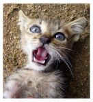 Crazy Eyes Kitty by HeWhoWalksWithTigers