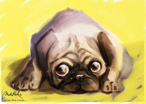 Puggy Day