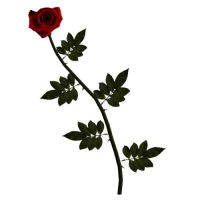 Long Stem Red Rose by TexelGirl-Stock