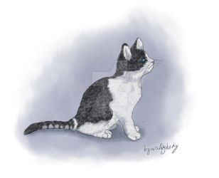 First Cat by MrHighsky